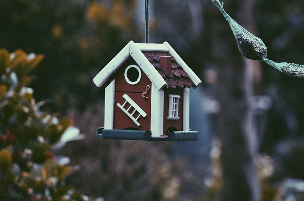 bird house hanging from tree branch